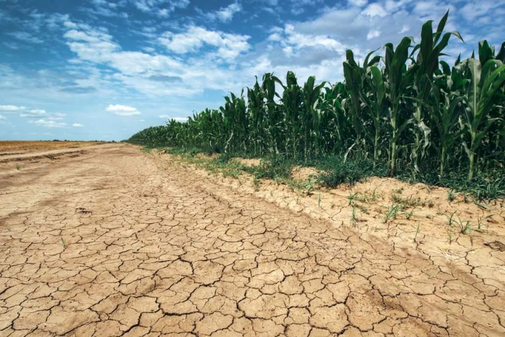 Új gabonafajokra van szükség a változó időjárás miatt