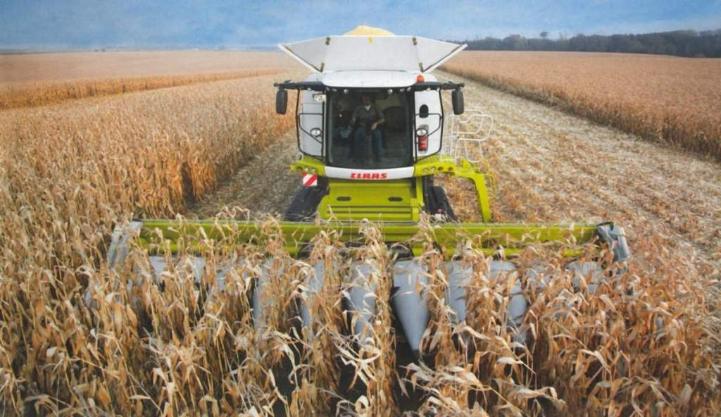 Megkezdődött a napraforgó és a kukorica betakarítása