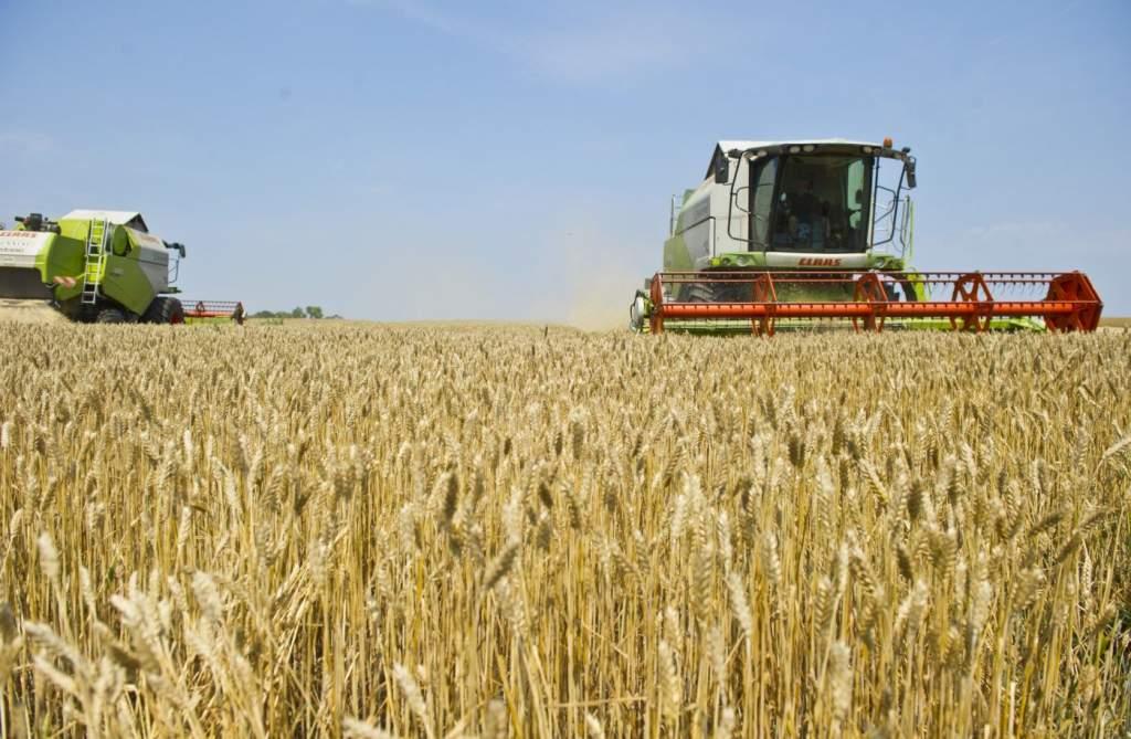 Egyre kevesebb búzát vetnek a gazdák