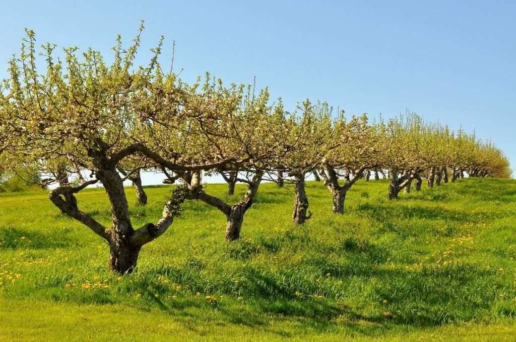 Összeírják a gyümölcsültetvényeket