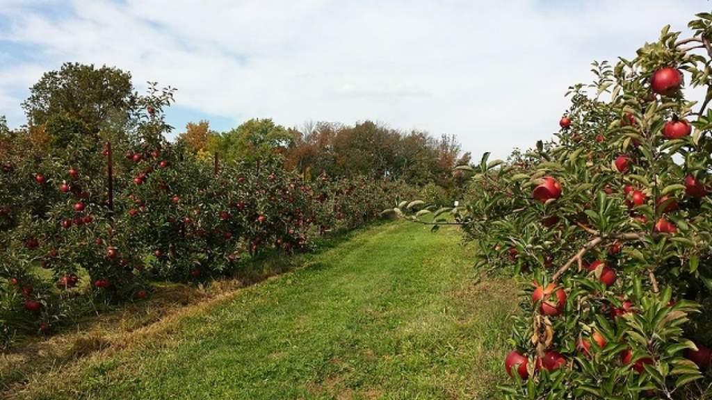Gyümölcsös ültetvények összeírása