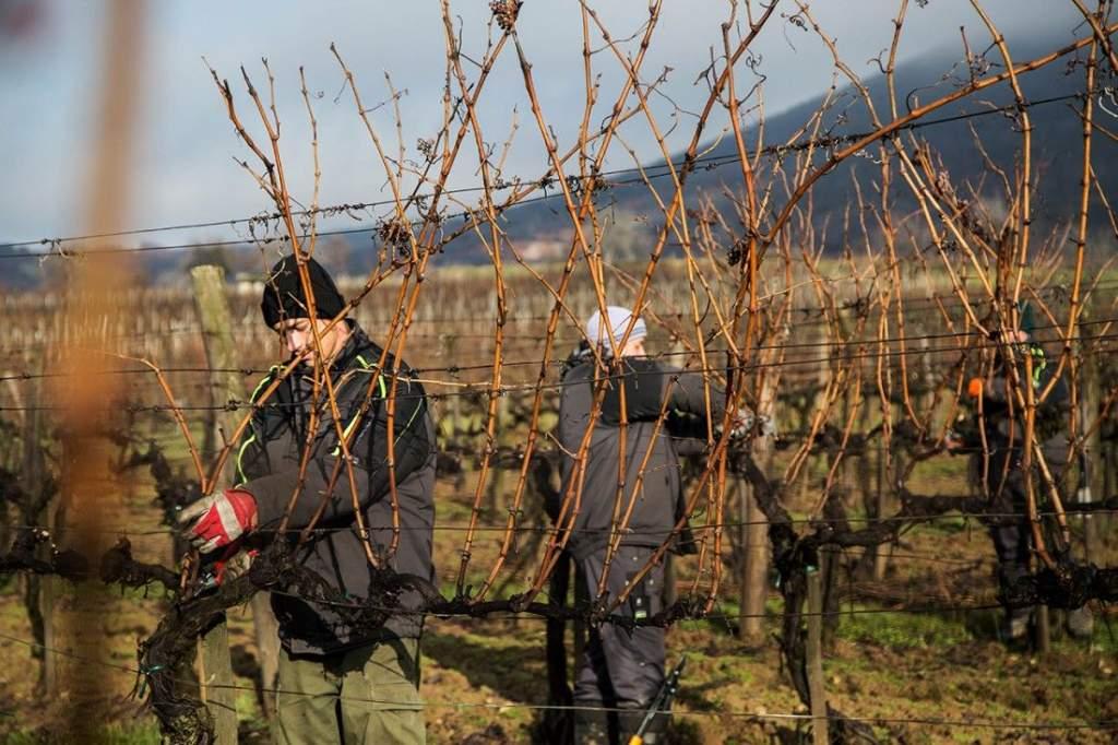 Nem kezdte ki a tél a szőlőt