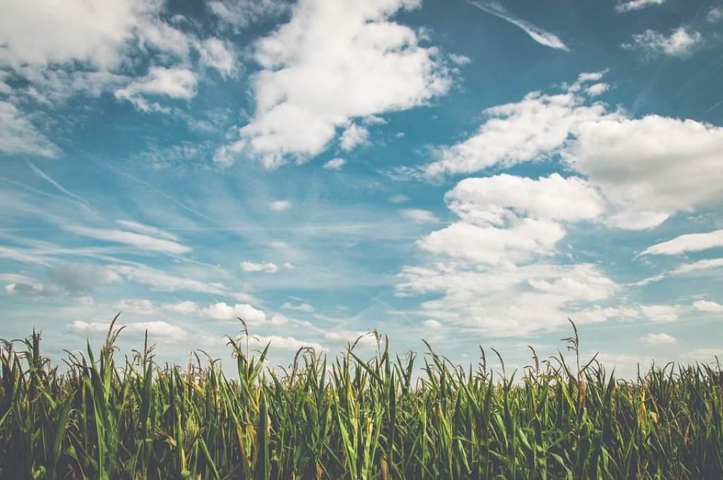 Szárazság, sár és aszály - ez a helyzet a szántóföldeken