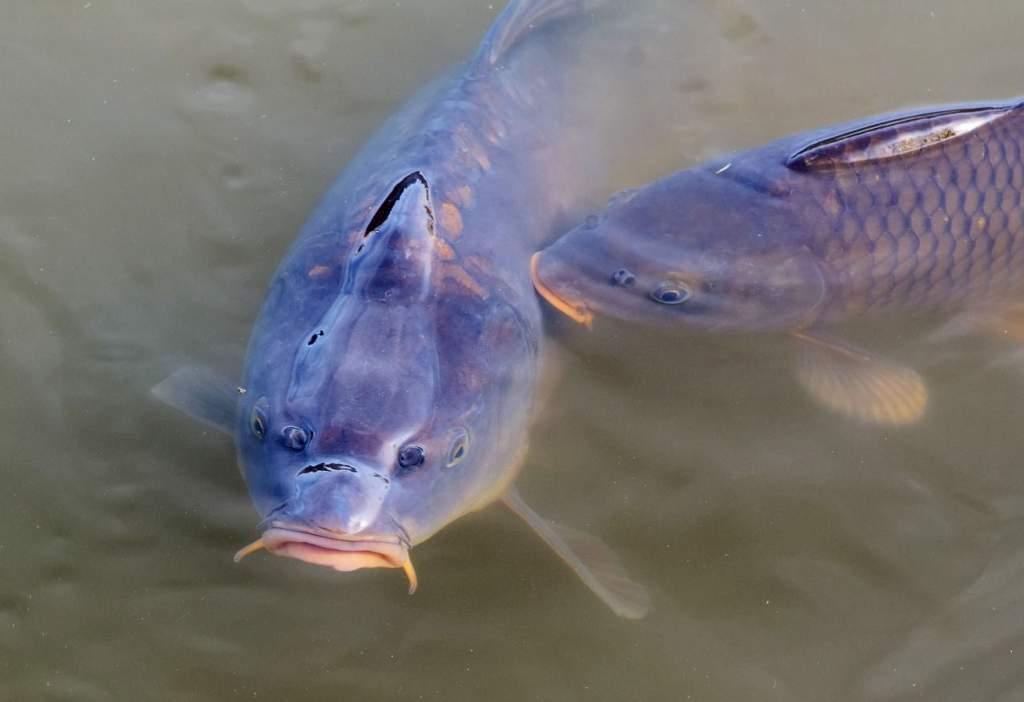 Fejlesztik a magyar halgazdaságokat