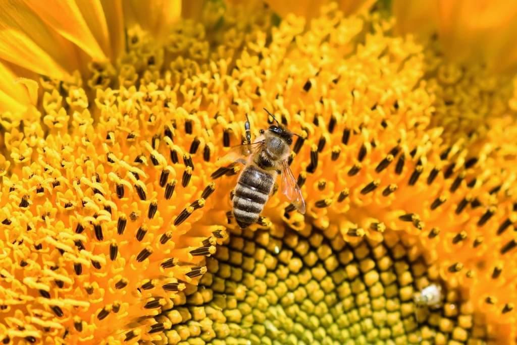 Kihalófélben a magyar méhészet