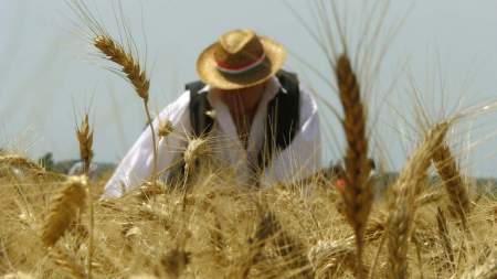 Kiskunfélegyházi aratófesztivál és XV. kézi aratóverseny