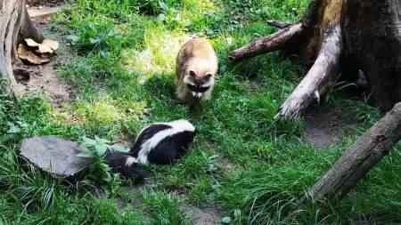 Augusztus 30-án lesz az Állatkertek éjszakája