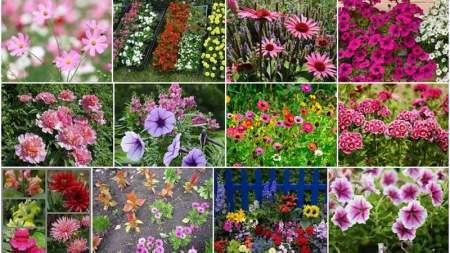 Nyári virágünnep