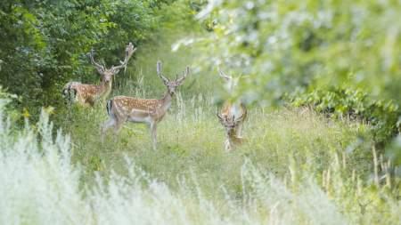 Erdő és Vad Konferencia lesz Kiskunfélegyházán
