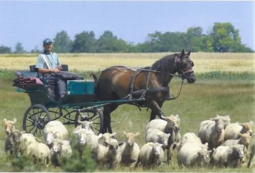 Községi és megyei érték a gátéri lovas postás intézménye
