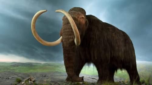 Mit mesélnek a régmúlt tárgyai? – Mamut vagy mammut?