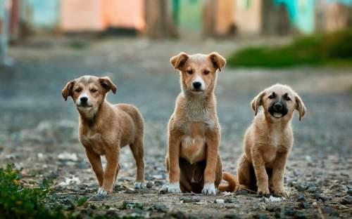 Ivartalanítási program a kóbor kutyák számának csökkentéséért