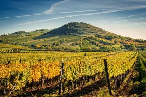 Augusztus 1-jétől hatályba lép az új bortörvény