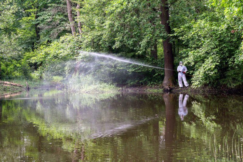 A földi biológiai irtás során a vegyszert a szúnyoglárva tenyészőhelyén közvetlenül a rovarok élőhelyére permetezik, és az a szúnyoglárva elpusztítását követően teljesen lebomlik, ezért a környezetet nem károsítja. Fotó: Vajda János /MTI